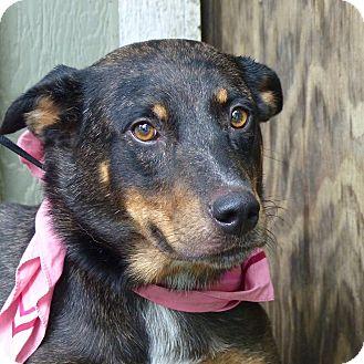 Cattle Dog Mix Dog for adoption in Baton Rouge, Louisiana - Gidget