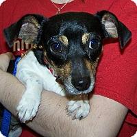 Adopt A Pet :: T Lil Bit - Lafayette, LA