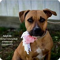 Adopt A Pet :: Zelda - ADOPTED! - Zanesville, OH