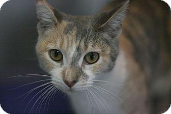 Calico Cat for adoption in Canoga Park, California - Silhouette