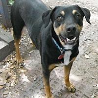 Adopt A Pet :: Rubix - Wallis, TX