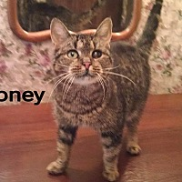 Adopt A Pet :: Honey - Ringgold, GA
