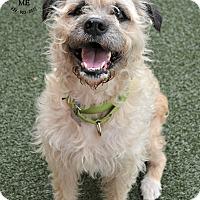 Adopt A Pet :: Benji - Youngwood, PA