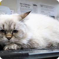 Adopt A Pet :: hazel - Muskegon, MI