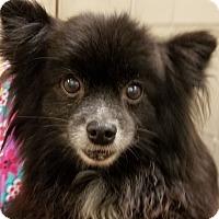 Adopt A Pet :: Ella - Ball Ground, GA