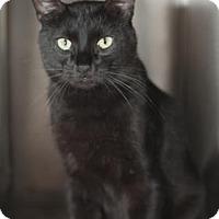 Adopt A Pet :: Cleopatra - Palm Springs, CA
