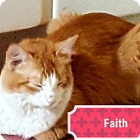 Adopt A Pet :: Faith - Painted Post, NY