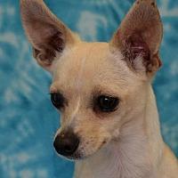 Adopt A Pet :: Miss Muffet - Eureka, CA