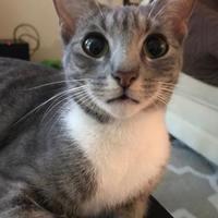 Adopt A Pet :: Daisey - Pompano Beach, FL
