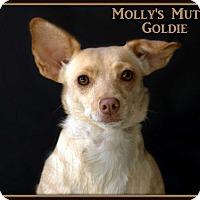 Adopt A Pet :: Goldie - Dixon, KY