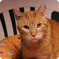 Adopt A Pet :: Tim McGraw - Topeka, KS
