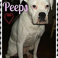 Adopt A Pet :: Peeps - Cincinnati, OH