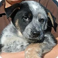 Adopt A Pet :: Jackson - white settlment, TX