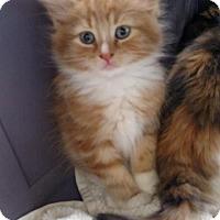 Adopt A Pet :: Patron - Fredericksburg, VA