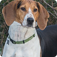 Adopt A Pet :: Molly - Elmwood Park, NJ