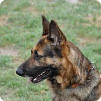 Adopt A Pet :: Clyde - Dripping Springs, TX