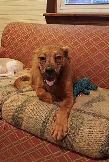 Spaniel (Unknown Type) Mix Dog for adoption in Spartanburg, South Carolina - Keegan