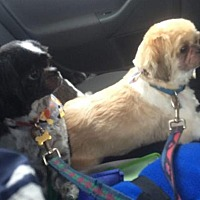 Adopt A Pet :: Teddy & Cadin in RI Bonded pair CP - Providence, RI