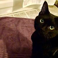 Adopt A Pet :: Luann - Stevensville, MD