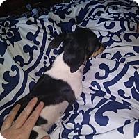 Adopt A Pet :: Tic - Tucson, AZ