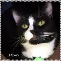 Adopt A Pet :: Devin - Jasper, IN