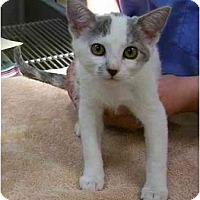 Adopt A Pet :: Pumpkin - Odenton, MD