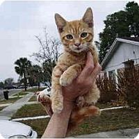 Adopt A Pet :: Lokie - Jacksonville, FL