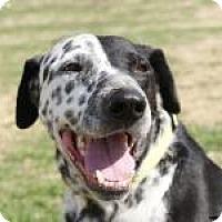 Adopt A Pet :: Warrior - Newcastle, OK