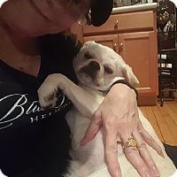 Adopt A Pet :: Wilbur - Chicago, IL