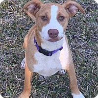 Adopt A Pet :: Missy - North East, FL