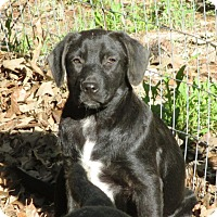 Adopt A Pet :: OLIVIA - Carrollton, TX