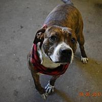 Adopt A Pet :: Annie - Walthill, NE