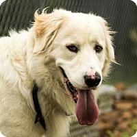 Adopt A Pet :: Odin - chouteau, OK