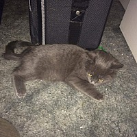 Adopt A Pet :: Bluey - Lancaster, CA