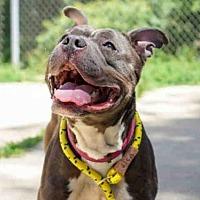 Adopt A Pet :: SHILOH - Aurora, IL