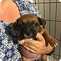 Adopt A Pet :: Abby - Homestead, FL