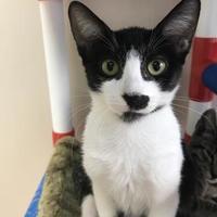 Adopt A Pet :: Mabella - Miami, FL