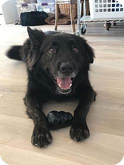 German Shepherd Dog Mix Dog for adoption in Hawthorne, California - Cooper
