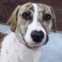Adopt A Pet :: Dolly - Oxford, MS