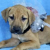 Adopt A Pet :: Samantha - Picayune, MS