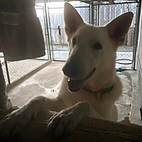 Adopt A Pet :: Carson - San Diego, CA