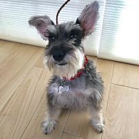 Adopt A Pet :: Rachel - Redondo Beach, CA