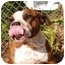 Photo 2 - Pit Bull Terrier Mix Dog for adoption in El Cajon, California - Emma