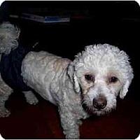 Adopt A Pet :: Harry - Dayton, OH