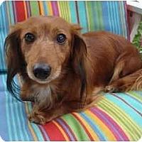Adopt A Pet :: Rosie Von Garten - San Jose, CA