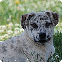 Adopt A Pet :: Cracker Jack - Brattleboro, VT