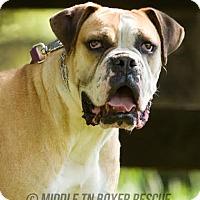 Adopt A Pet :: Franklin - Brentwood, TN