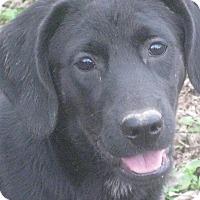 Adopt A Pet :: Vali - Derry, NH