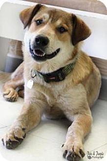 Great Pyrenees/Australian Cattle Dog Mix Dog for adoption in Yukon, Oklahoma - Charlie