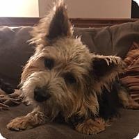 Adopt A Pet :: Clark - Omaha, NE